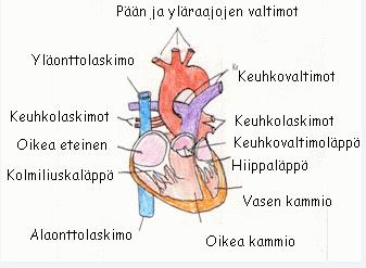 Sydämen läppäviat - Älykäs teknologia - Metropolia Confluence b2015263df